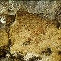 Collectie Nationaal Museum van Wereldculturen TM-20029659 Indiaanse rotstekeningen bij Boka Onimß Bonaire Boy Lawson (Fotograaf).jpg