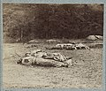 Confederate soldiers as they fell near the center of the battlefield of Gettysburg LCCN2013645925.jpg
