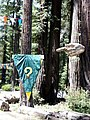 Confusion Hill in Redwoods 326.jpg