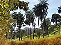 Coqueiros na estrada - panoramio.jpg