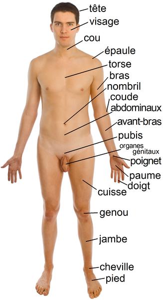 Francais porno en ligne gratuit et sans sms - xxxpornowin