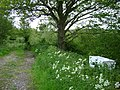 Cow parsley and fridge labelled 'Dairy' - geograph.org.uk - 1320363.jpg
