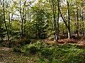Creech Woods - geograph.org.uk - 1021881.jpg