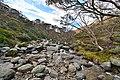 Creek off of the Snowy River - Kosciuszko National Park NSW.jpg