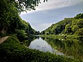 Creswell Gorge, Creswell Craggs, Notts (147).jpg