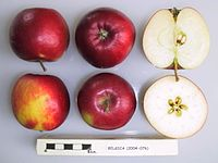 Cross section of Belgica, National Fruit Collection (acc. 2004-076).jpg