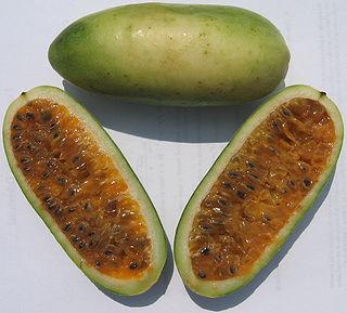 Banana passionfruit fruit