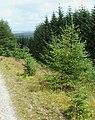 Cwm Dulas Plantation East, Ceredigion - geograph.org.uk - 929530.jpg