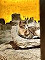 Cyprus-Cat-Limassol-Castle.jpg