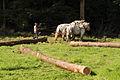 Débardage JEAN BAPTISTE RICARD mondial du cheval percheron 2011Cl J Weber02 (23456709673).jpg
