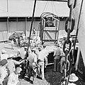 De paarden voor de koninklijke calèche bij aankomst in de haven van Willemstad, Bestanddeelnr 252-2737.jpg