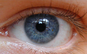 Allele - Image: Deep Blue eye