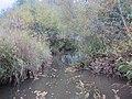 Degernäsbäcken (2).jpg