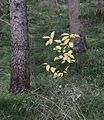 Deisenhofener Forst Taufkirchen-24.jpg
