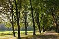 Denkmal geschützte Baum Allee - panoramio.jpg
