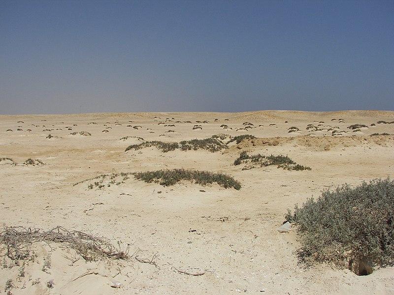 File:Desert - Sharm El Loli - Egypt - panoramio.jpg