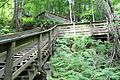 Devil's Millhopper Geological State Park 12.jpg