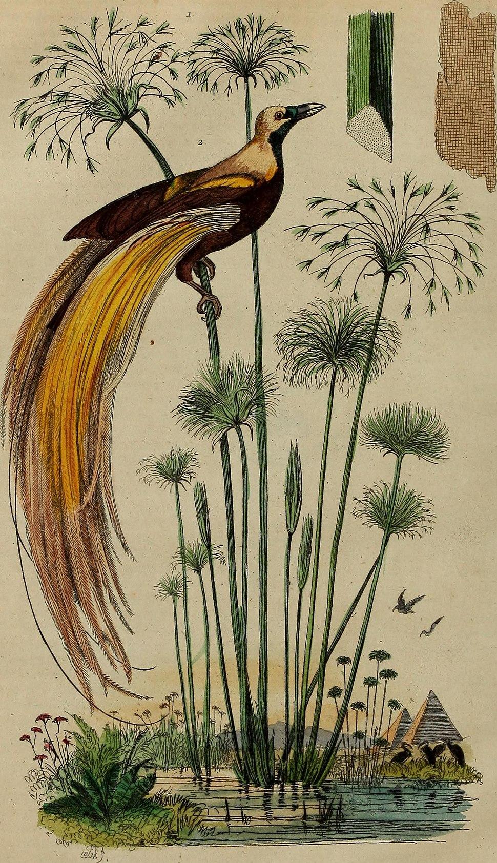 Dictionnaire pittoresque d'histoire naturelle et des phénomènes de la nature (1838) (14780745242)