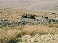 Dol-y-moch Isaf - geograph.org.uk - 379181.jpg