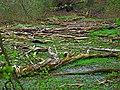 Driftwood near Rhine.jpg