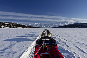 Sled dog - Driver view with a team on Wonder Lake