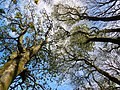Dumfries and Galloway, UK - panoramio (4).jpg