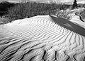 Dunes in the Carcross desert, Yukon (11003647235).jpg