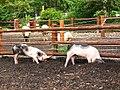 EGApark- Kinderbauernhof - geo.hlipp.de - 14547.jpg