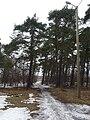 EU-EE-TLN-Pirita-forest near velodrome.JPG