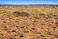 East of the Jarilla Mountains - Flickr - aspidoscelis (3).jpg