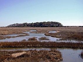 Eastern Shore of Virginia National Wildlife Refuge, VA. Credit- USFWS (11803670733).jpg