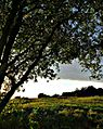 Eckweiler - Abendsonne (HDR) - panoramio.jpg