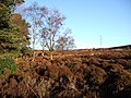 Edge of Cragside woodlands - geograph.org.uk - 305452.jpg