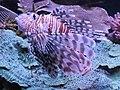 Eilat Coral World Underwater Observatory 14.jpg