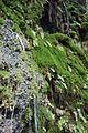 Ein Gedi nature reserve (14) (5364681791).jpg