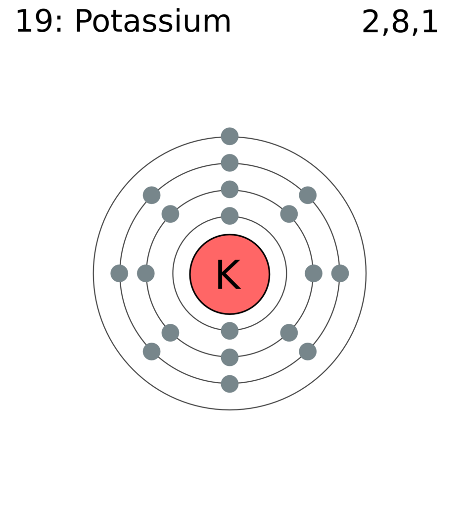 File:Electron shell 019 potassium.png - Wikimedia Commons
