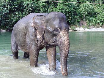 Elephant13r.jpg