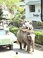 Elephant Ride in Koreagaon park, Pune. Pic 5. - panoramio.jpg
