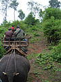 Elephant ride in Chiang Rai Province 2007-05 6.JPG