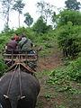 Elephant ride in Chiang Rai Province 2007-05 6.JPG