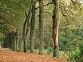 Elfbergen Gaasterland. Dode eik (Quercus) 01.JPG