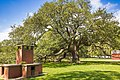 Emancipation Oak.jpg