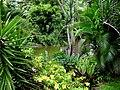 Embalse Dos Bocas de Utuado - panoramio (1).jpg