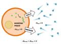 Entropie buňečného metabolismu.png