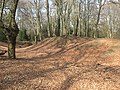Epping Forest, Ambresbury Banks - geograph.org.uk - 1213170.jpg