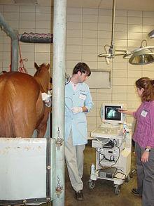 Horse colic - Wikipedia