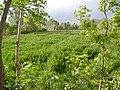 Eskandar, East Azerbaijan Province, Iran - panoramio (1).jpg