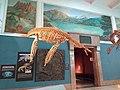 Esqueleto oseo de plesiosaurio.jpg