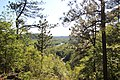 Etowah River - panoramio (2).jpg