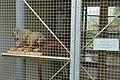 Eulemur fulvus - Food and Agriculture Museum - Setagaya, Tokyo, Japan - DSC09866.jpg